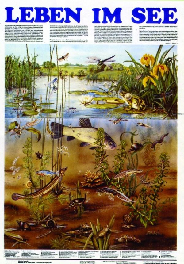 Biocenoza lacurilor 3