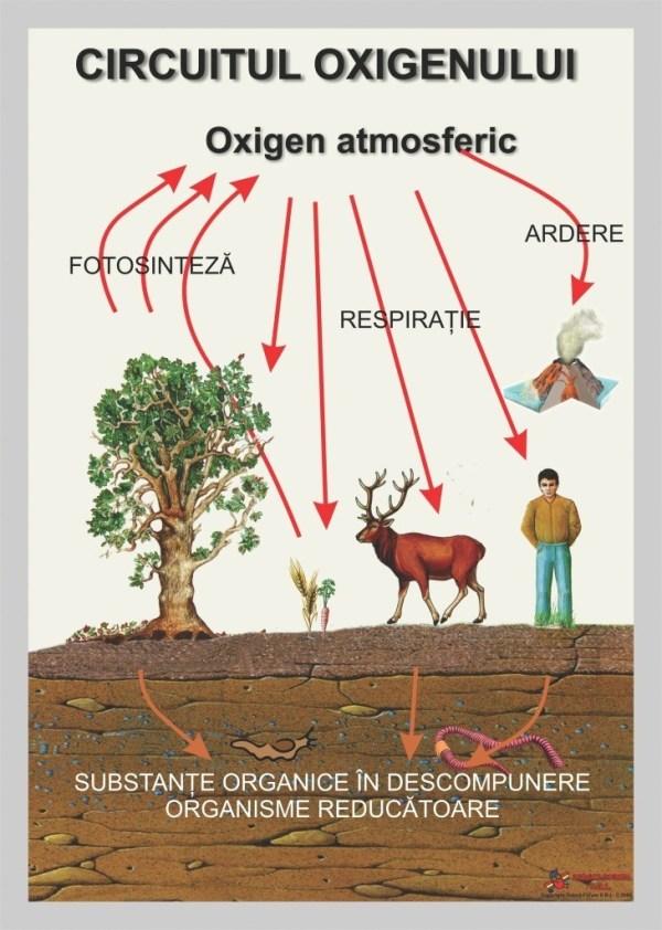 Circuitul oxigenului 3
