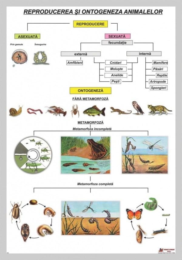 Reproducerea si ontogeneza animalelor 3