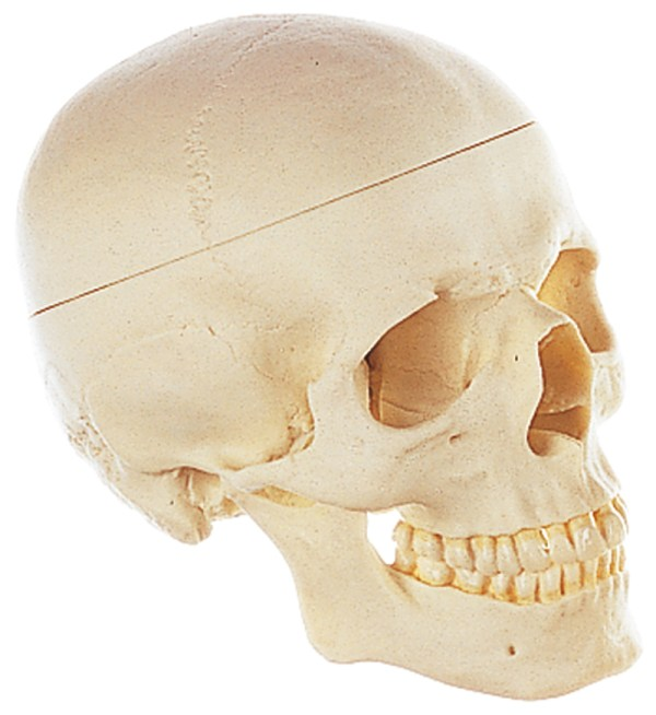 Craniu 3