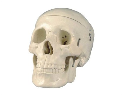 Craniu