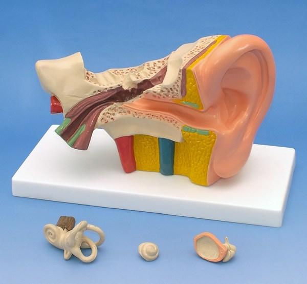 Urechea 6