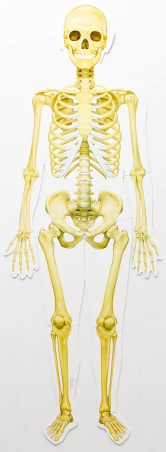 Corpul uman - set magnetic 6