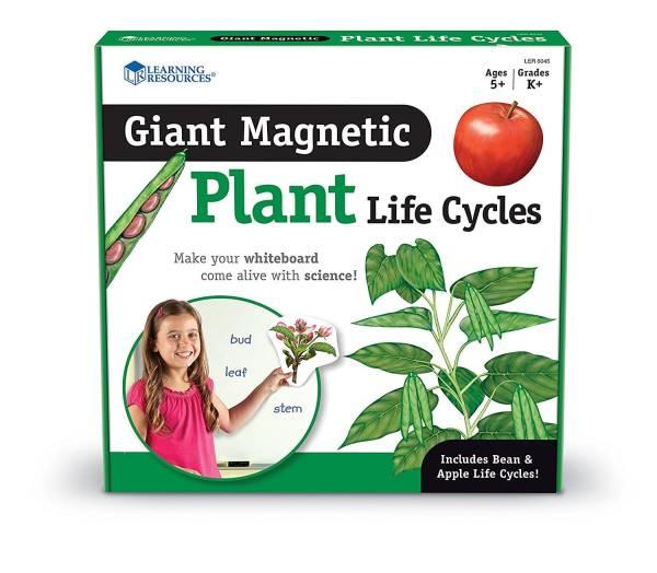 Ciclul vietii la plante 8