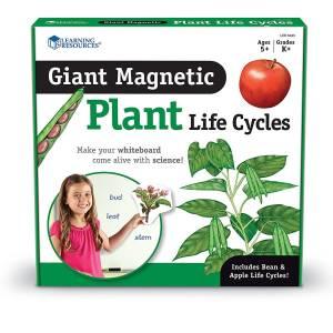 Ciclul vietii la plante 13