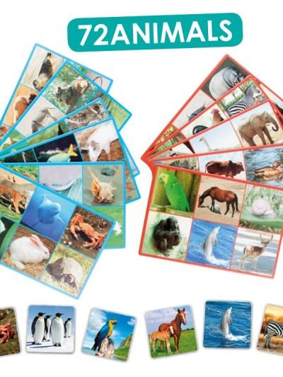 Loto + cuvinte 72 de animale