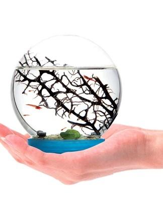 Ecosistem acvatic autonom