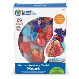 Mulaj inima - marime naturala 10