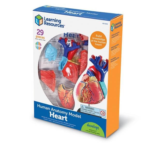 Mulaj inima - marime naturala 7