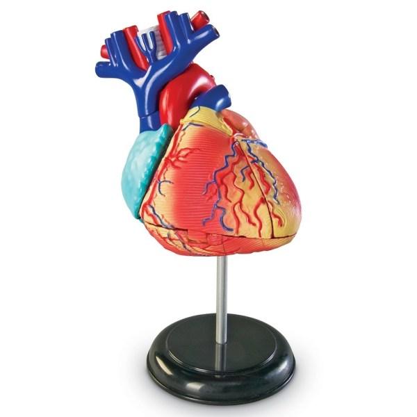 Mulaj inima - marime naturala 3
