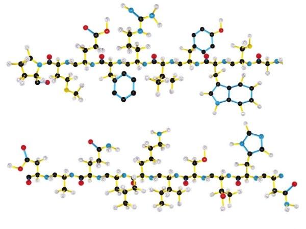 Biochimie 6