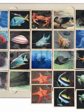 Fauna marina - joc loto
