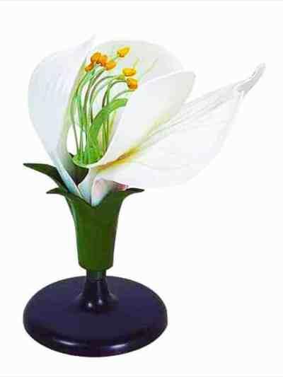 Floare de Mazare