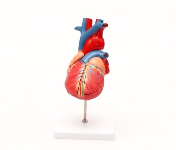 Mulaj inima – marime 2X 4