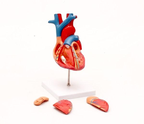 Mulaj inima – marime 2X 5
