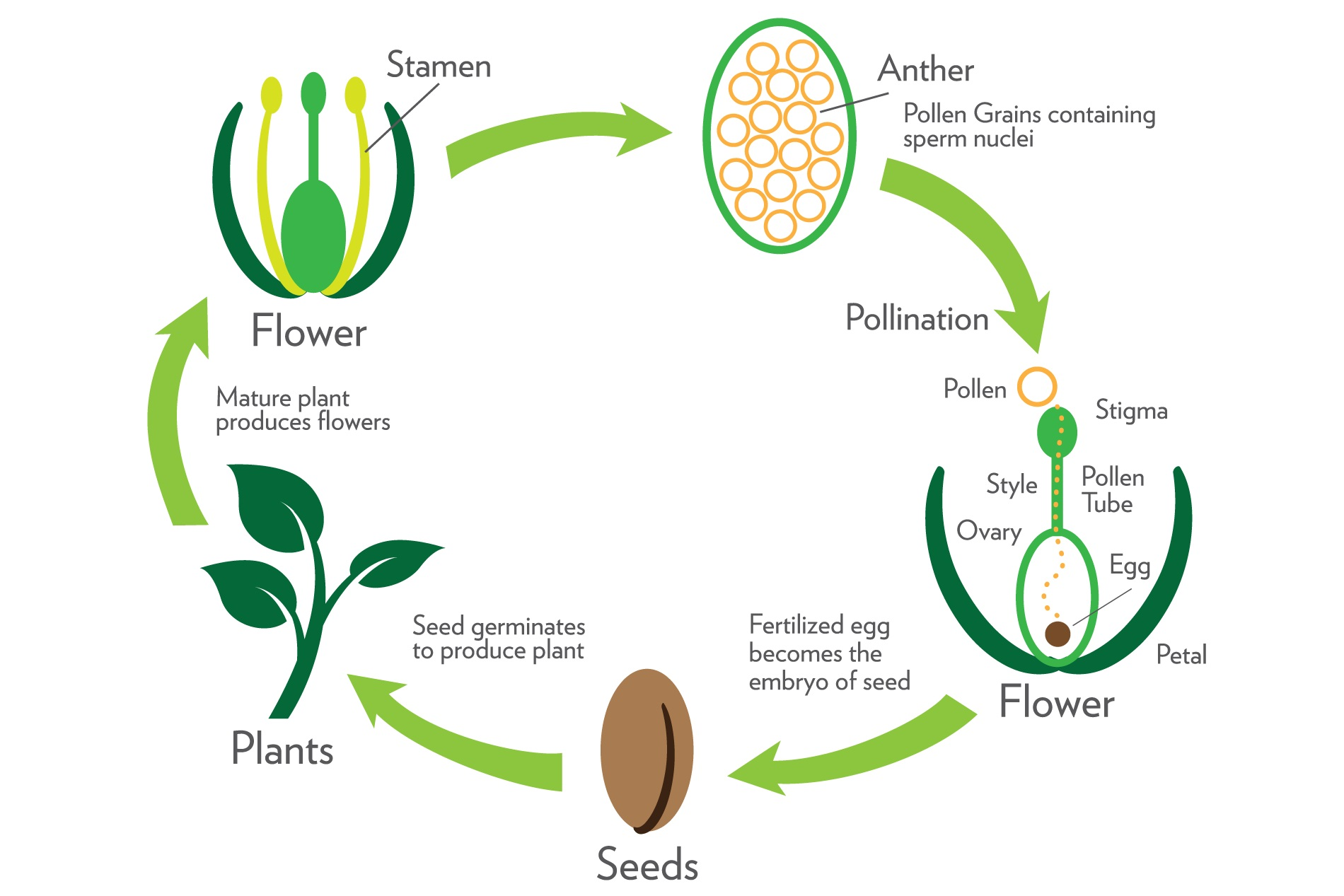 Process Plant Reproduction Worksheet