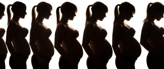 etapas-embarazo