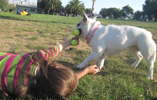 nino jugando con perro