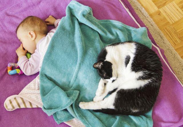 bebes-y-gatos7