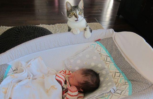 bebes-y-gatos8