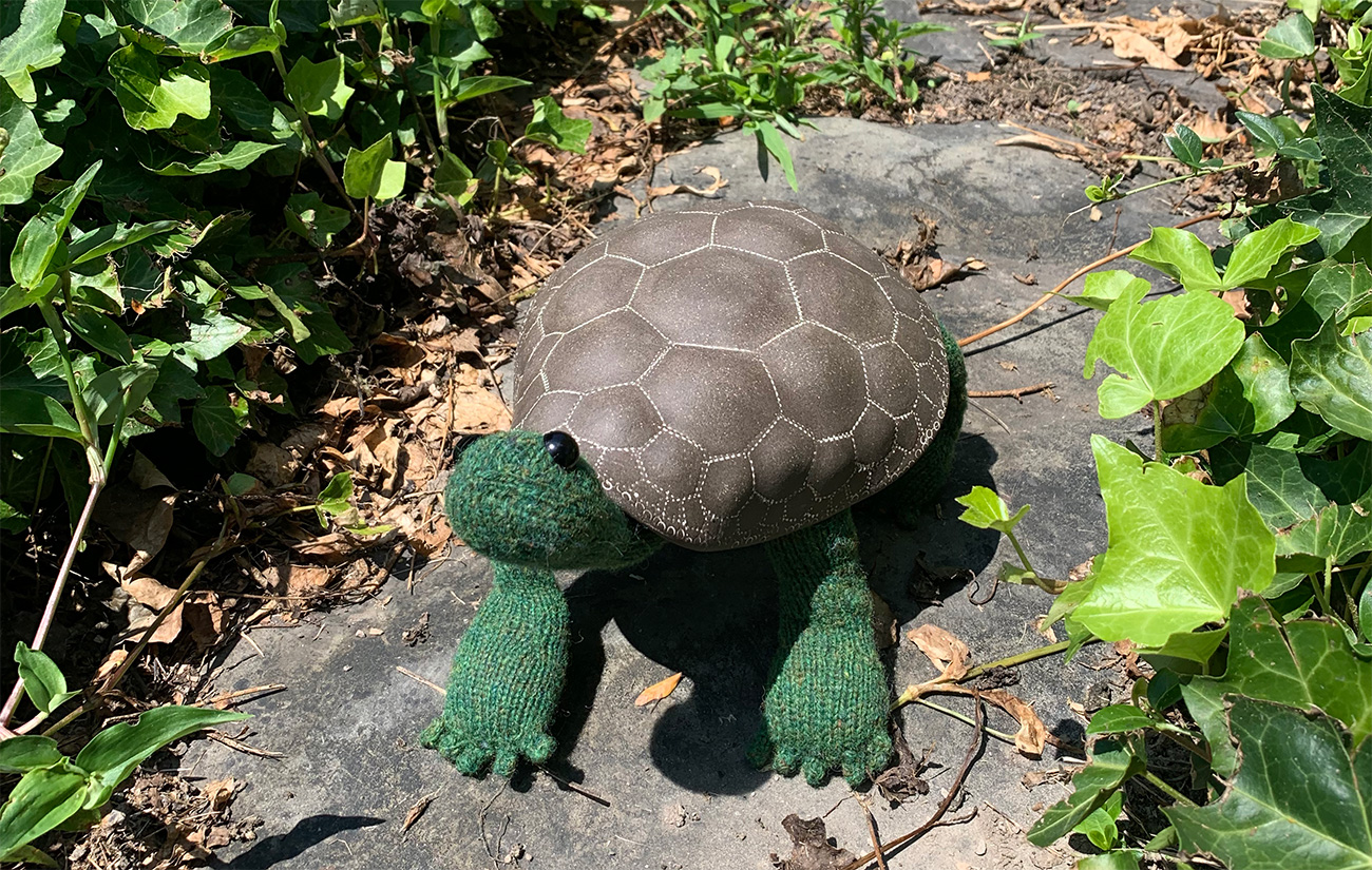 Tess the Tortoise