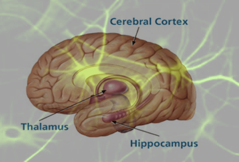 mathias-sager-adult learning memory brain hippocampus
