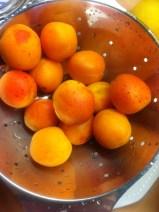 gebackene Aprikosenknödel-französische Bergeron-Aprikosen