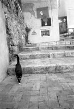 cat in panier (2)