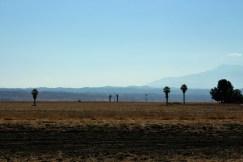 paysage Moreno Valley (2)
