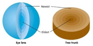 Figure 3: Whale Eyes Have Rings Like Trees.