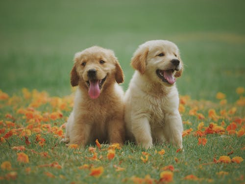 Puppies in a field