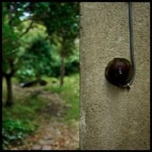 about_a_garden