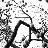 Fruits_And_Needles