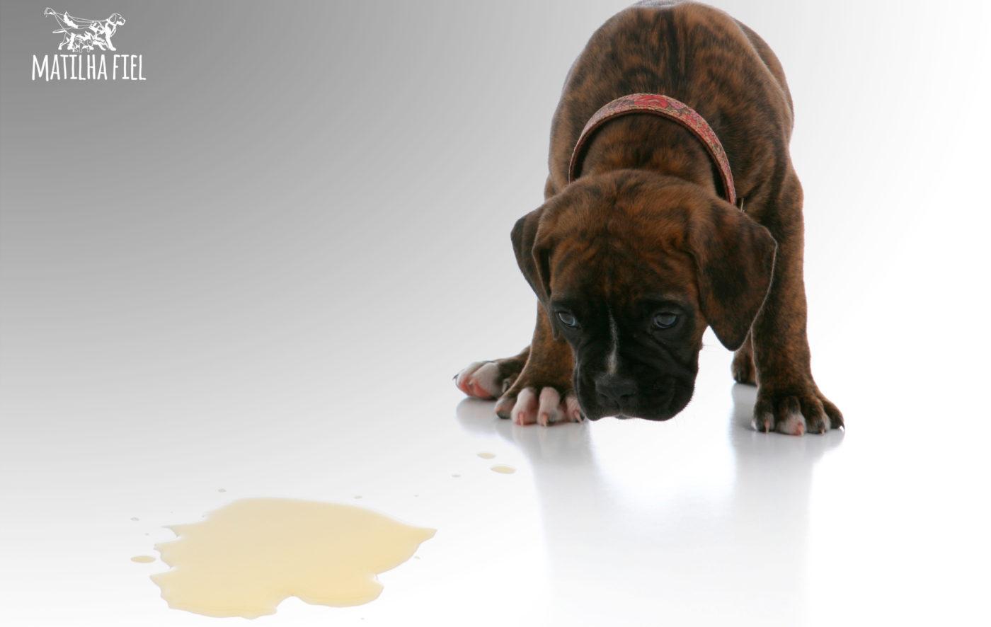 Xixi de Cachorro - Elimine o cheiro. Saiba como.