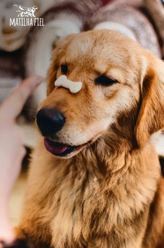 cachorro_aguardando_comando_para_comer