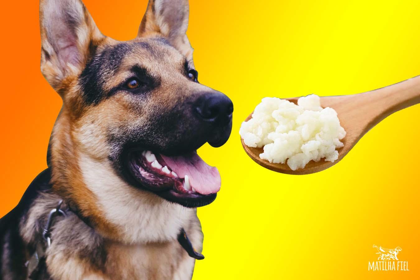 cachorro-com-kefir