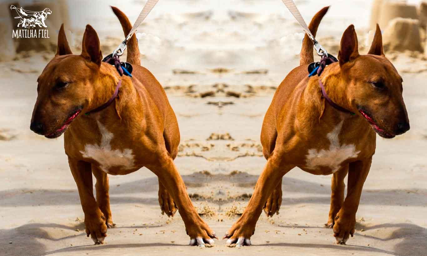 Acalme seu cão ansioso antes do passeio!