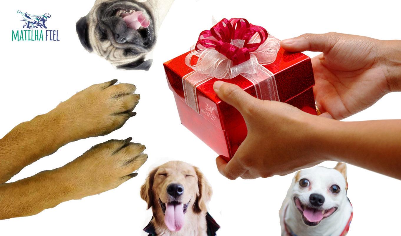 melhor presente para seu cão