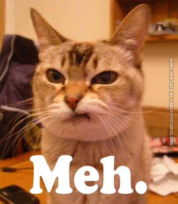 funny-cat-pics-meh1