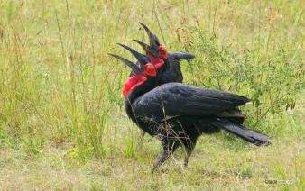 matira-safari-bushcamp-birding-00001