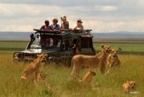 matira-safari-bushcamp-activities-gamedrive-00003