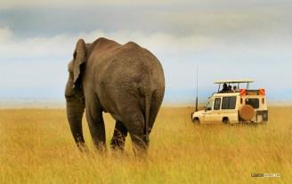 matira-safari-bushcamp-activities-gamedrive-00017