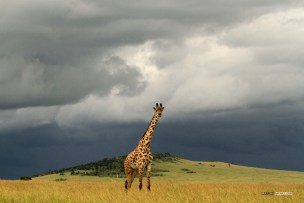 matira-safari-bushcamp-activities-walking-safari-00005