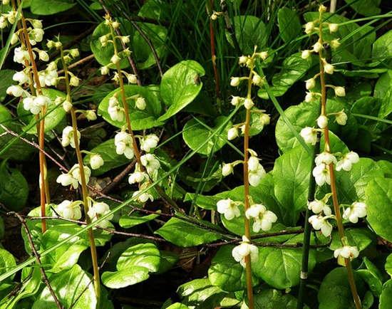 Травяные сборы при эндометрите