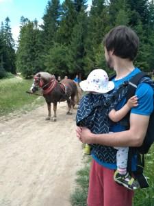 ojciec nosi dziecko w nosidle ergonomicznym za nimi powóz koniem