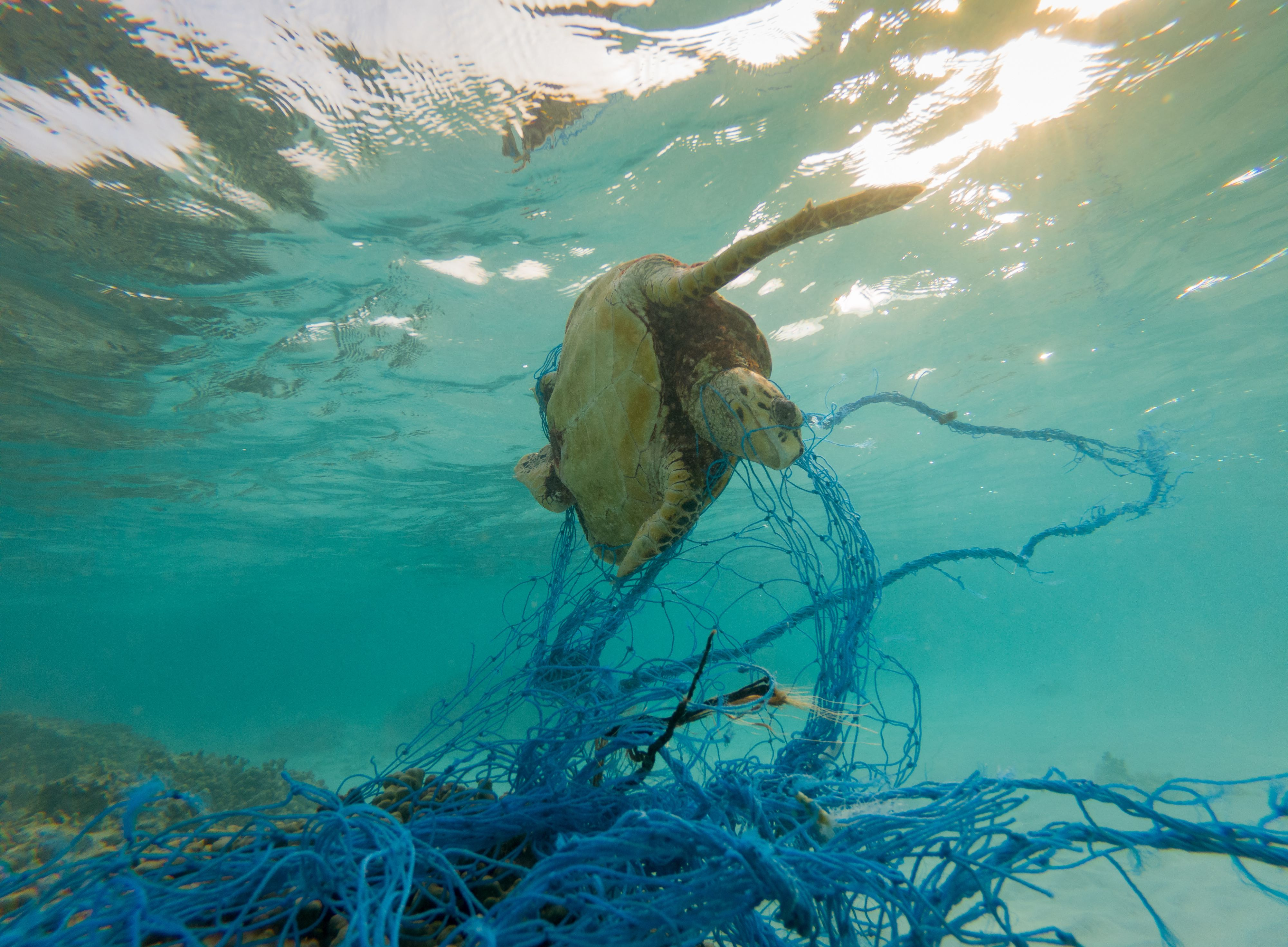 An estimated 640,000 tonnes of fishing gear are dumped in the ocean each year, polluting the sea and fatally trapping marine life.