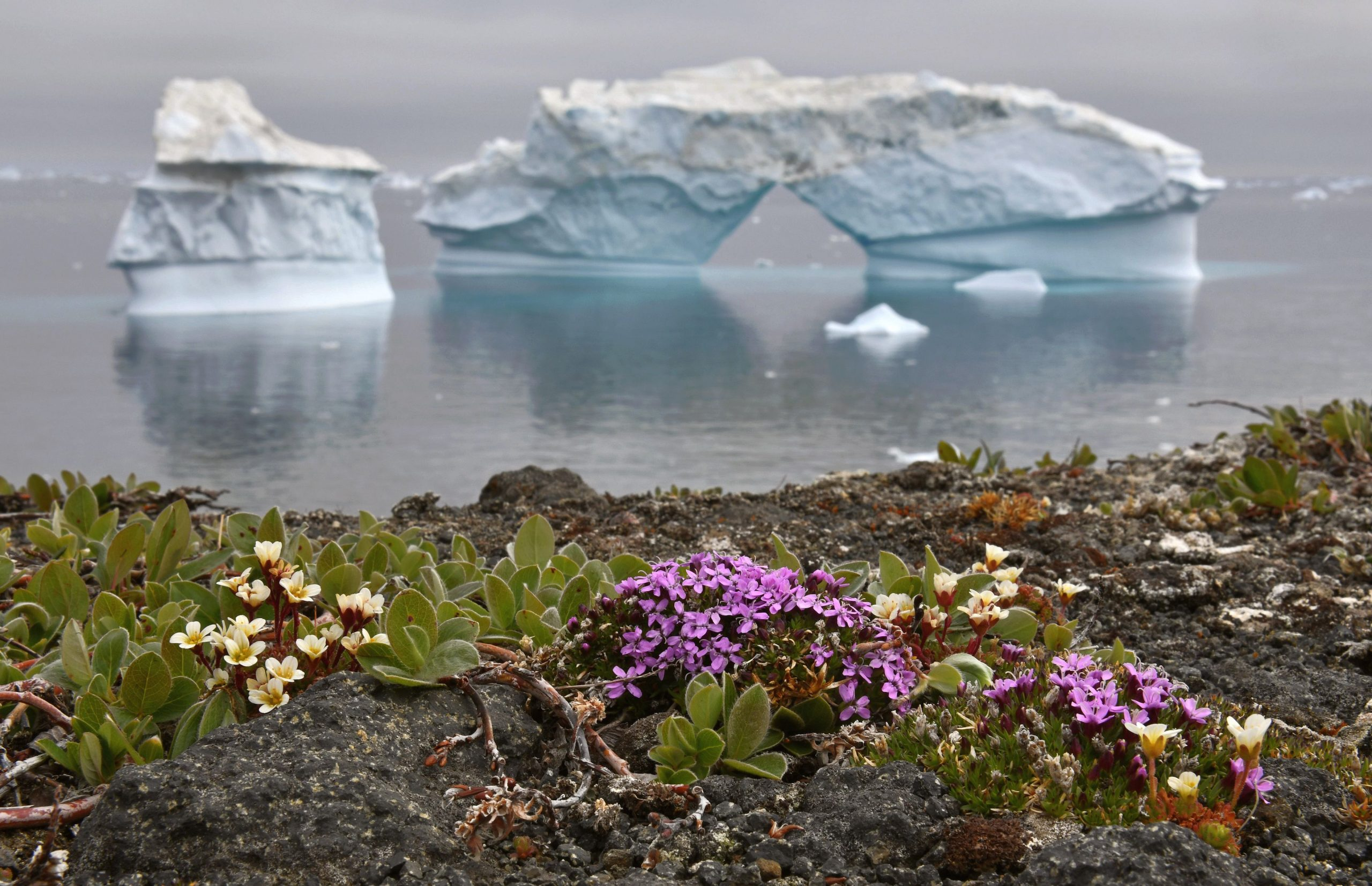 ice melts arctic, more plants are found