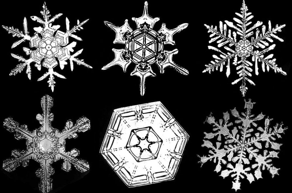 Snowflakes photographed by W. Bentley at the end of the 19th century