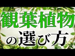 【風水】観葉植物は迷ったらこれ!上がる運気と正しい選び方について!