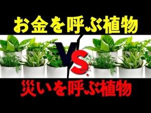 [植物風水インテリア] お金を呼ぶ植物 l 災いを呼ぶ植物 l 植物必ず厳選して選択しなければならない l 植物風水 l Nasan 風水インテリア
